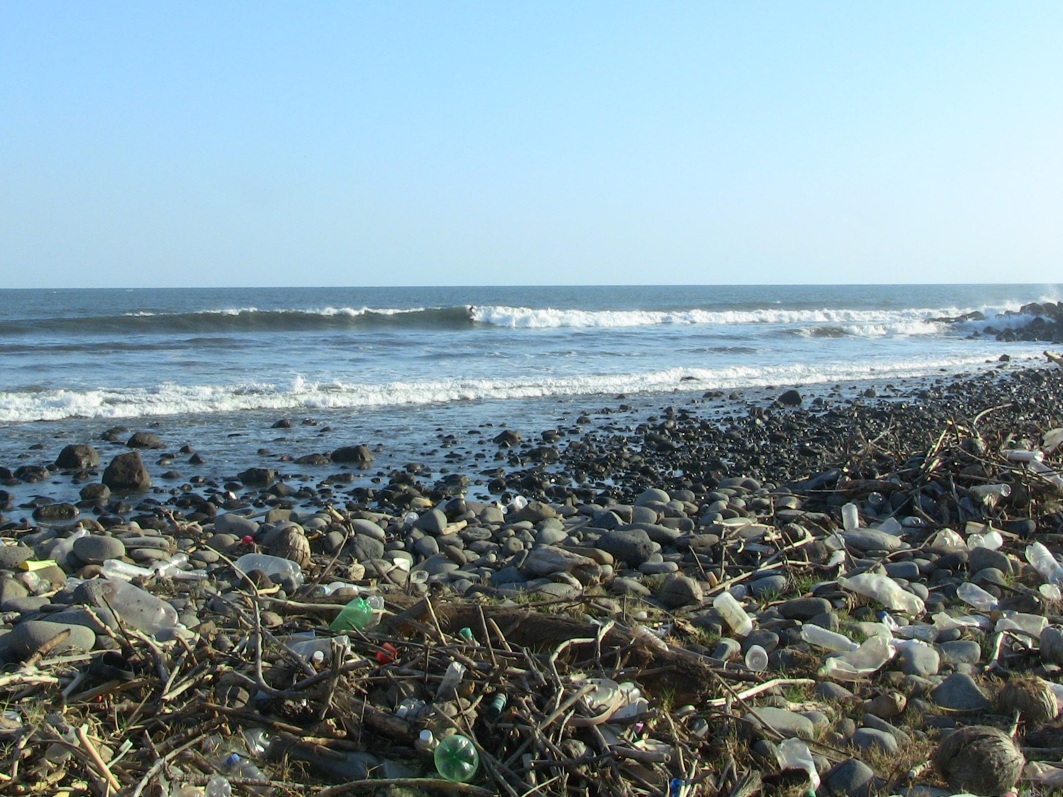 Beach Cleanup 2011